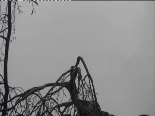 Webcam stork in Isny