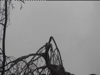 Das Live Bild der Webcam zeigt Das Storchennest an der Post